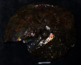 """22"""" 58 lbs Large full spectrum complete Canadian Ammolite specimen"""