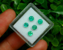 Muzo 1.49Ct 5Pcs Natural Colombian Green Color Muzo Emerald ST309