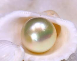 12.80MM 14.90Ct Australian South Sea Salt Water Pearl D3008/A242