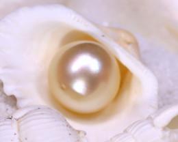 12.70MM 13.52Ct Australian South Sea Salt Water Pearl D3009/A242