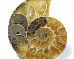 Natural Ammolite Pendant