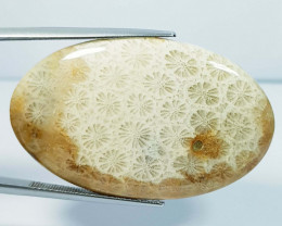 42.66 ct Natural Fossil Coral Oval Cabochon  Gemstone