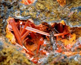 Crocoïte 415 grammes - Dundas mineral field, Tasmanie, Australie