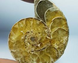 70.36 ct Natural Ammonite Fancy Cabochon  Gemstone
