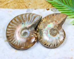Ammonite 167.12Ct Natural Madagascar Ammonite Fossil C2124