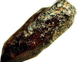 FOSSIL OF A WALRUS TOOTH 24.35 CTS [MX 6697]