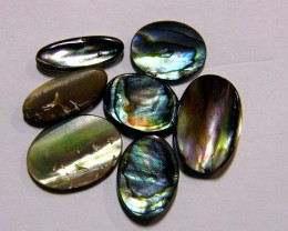PARCEL PAUA /ABALONE  MOTHER PEARL SHELL10.1  CTS AAT1420