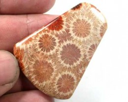 NATURAL  PETRIFIED CORAL  48 CARATS A855