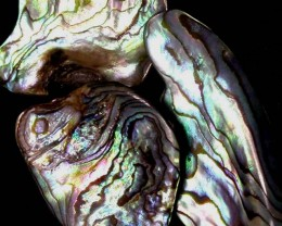 AUSTRALIAN ABALONE SHELL  PARCEL 29.80 CTS [PF 1287]