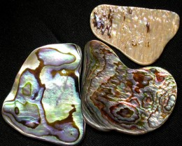 AUSTRALIAN ABALONE SHELL  PARCEL 22.90 CTS [PF 1295]