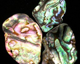 AUSTRALIAN ABALONE SHELL  PARCEL 19.70 CTS [PF 1298]