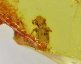 AMBER WITH BEATLE INSECT-COLOMBIA 11.30 CTS [MX8109]