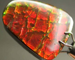 GEM QUALITY  CANADIAN AMMOLITE -POLISHED- 9.55 CTS [S5545]