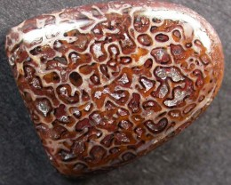 DINOSAUR FOSSIL STONES -WELL POLISHED 10.45 CTS [MX9679]