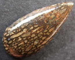 DINOSAUR FOSSIL STONES -WELL POLISHED 7.70 CTS [MX9681]