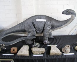 Australian Apatasaurus Dinosaur