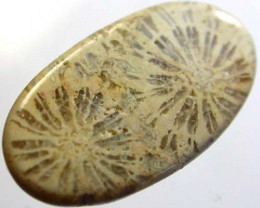 TOP GRADE CORAL FOSSIL  -GREAT PATTERNS 7 CTS [MGW 568  ]