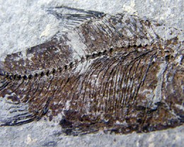 THE FISH FROM MILLIONS YEARS AGO 45 CTS [JF5]