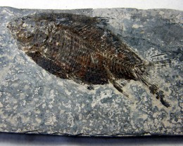 THE FISH FROM MILLIONS YEARS AGO 525 CTS [JF9]