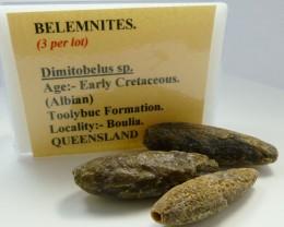 3 PC AUSTRALIAN BELEMNITES  210 CTS RT 1456