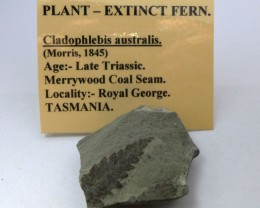 AUSTRALIAN EXTINCT PLANT FOSSIL  FERN    174  CTS RT 1479
