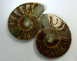 700 CTS  LARGE  MADAGASCAR  AMMONITE  SPLIT RT 2268