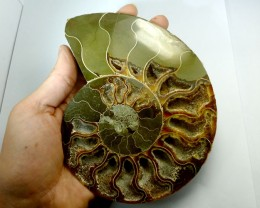 3239 CTS  MASSIVE   MADAGASCAR  AMMONITE  SPLIT RT 2269