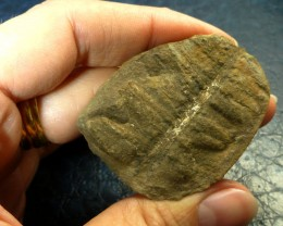 FREE SH1P 11.65 CTS USA FERN FOSSIL 300 MILL YRS OLD MS 463