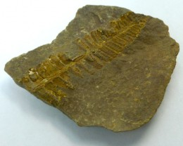 90.70 CTS USA FERN FOSSIL 300 MILLION YRS OLD MS 468