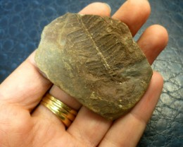 206.45 CTS USA FERN FOSSIL 300 MILLION YRS OLD MS 470