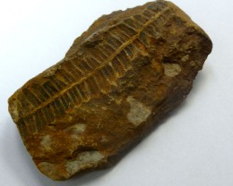 158.70 CTS USA FERN FOSSIL 300 MILLION YRS OLD MS 476