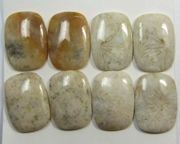 114 CTS PAIRS NATURAL  CORAL FOSSIL STONES MS1066