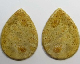 55 CTS PAIRS NATURAL  CORAL FOSSIL STONES MS1071