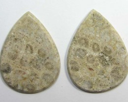 5.9 g ONE PAIR NATURAL  CORAL FOSSIL STONES MS1079