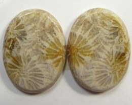 4 g ONE PAIR NATURAL  CORAL FOSSIL STONES MS 1080