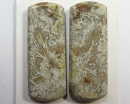 32.7 CTS ONE PAIR NATURAL  CORAL FOSSIL STONES MS1083