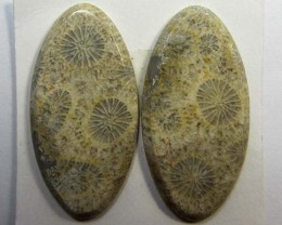 3.7 g ONE PAIR NATURAL  CORAL FOSSIL STONES MS1093