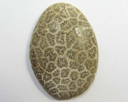 30.1 CTS ONE NATURAL  CORAL FOSSIL STONE MS1102