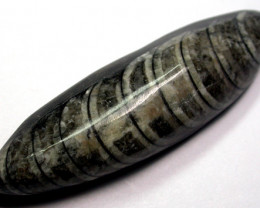 ORTHOCERAS ANCIENT FOSSIL 105 CTS [MGW986 ]