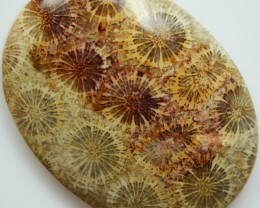 82.15 CTS INDONESIAN FOSSIL CORAL CABOCHON STONE