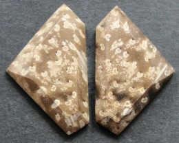 17.60 CTS FOSSIL PALM WOOD PAIR OF STONES