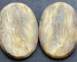 31.00 CTS FOSSIL PALM WOOD PAIR OF STONES