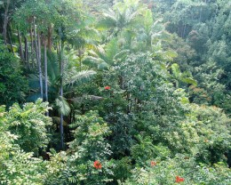 Hawaiian Jungle.