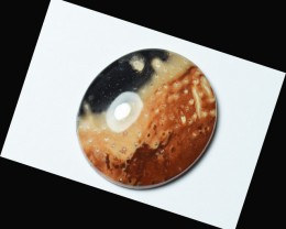 oval FOSSIL PALM ROOT cabochon 33.5mm by 30 by 7.5mm