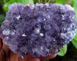 820 CTS   AMETHYST DISPLAY SPECIMEN    MS1830