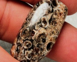 38.55 Carats Turtella Fossil Cabochon - 35mm by 18
