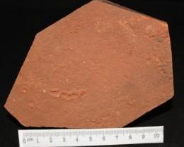 Rare Horodyskia Specimen 1.4 B.Y.O. Western Australia (GR13)