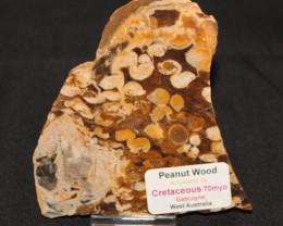 Peanut Wood, Aruacaria sp Cretaceous, Western Australia GR22