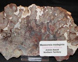 Stomatolite, Madiganites mawsoni, Australia GR23