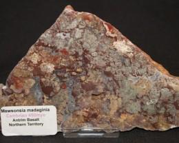 Stromatolite Madiganites mawsoni slice Australia GR25